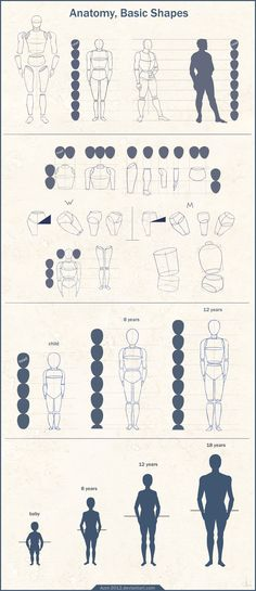 Anatomy Basic Shapes by Azot2014.deviantart.com on @deviantART