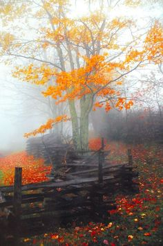 Really magical! | nature | | Misty Morning | #nature #mistymorning https://biopop.com/