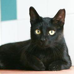 ALEXIS - Gato adoptado - AsoKa el Grande