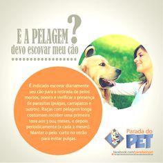 Dicas - @Parada do Pet www.paradadopet.com.br