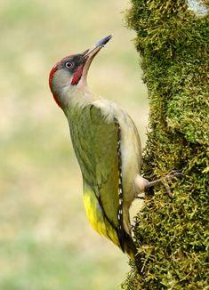 Birds 2, Wild Birds, Pet Birds, Beautiful Birds, Animals Beautiful, Funny Birds, Gold Work, Spring Fever, Flora And Fauna