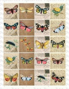 free collage sheets | ... Butterfly Digital Download Collage Sheet by petitepaperie on Etsy
