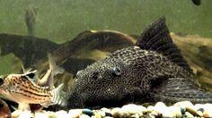 Akvaariokaloja II Pets, Animals And Pets