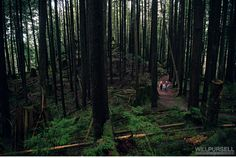 Check out his full post - it's a forest in Port Moody