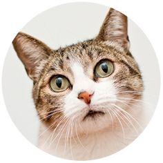 dietas caseiras para gatos