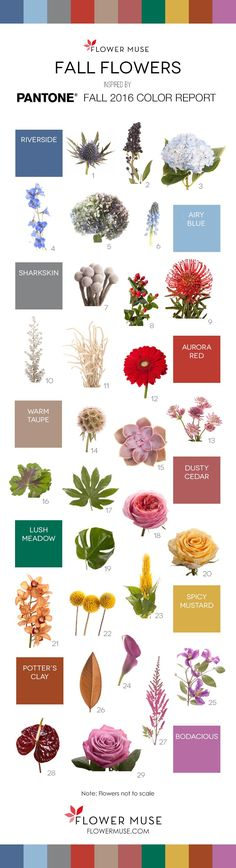 Flowers Drawings Inspiration : Fall Flowers inspired by Pantone 2016 Fall Color Report. See it on Flower Muse b Spring Wedding Flowers, Fall Flowers, Colorful Flowers, Beautiful Flowers, Flower Colors, Pantone 2016, Flower Chart, Flower Identification, Different Types Of Flowers