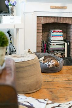 8 Great Dog Breeds for Small Apartments | Apartment Therapy