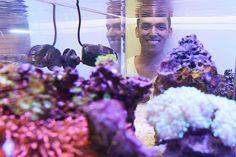 BizBeat: Aquarium business swims into Capital City | News Tribune