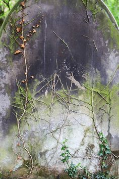 Moss & Ivy by Julie Shackson, via Flickr