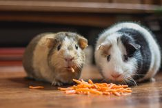 two guinea pigs eating cheese – My Word Animals Images, Animal Pictures, Funny Animals, Animal Eating, Hamster Life, Pigs Eating, Healthy Pets, Healthy Food, Guinea Pigs