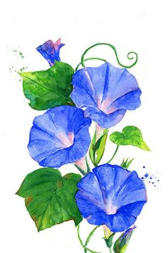 Pin By Helen Green On Drawing On Paper Watercolor - Morning Glory Watercolor Morning Glory Flowers, Blue Morning Glory, Watercolor Illustration, Watercolour Painting, Watercolor Flowers, Watercolors, Art Floral, Morning Glory Tattoo, Textile Art