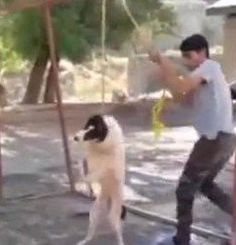 Petition · Mexico : Find and Prosecute Dog Hanger!! · Change.org