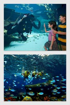 Marine Life Park is the world's largest oceanarium, with 60 million liters of water in Marine Life Park accommodating more than 100,000 marine animals of over 800 species including magnificent sharks and rarely sighted fishes. MRT: Harbourfront, then take the Sentosa Express from Sentosa Station at VivoCity (Lobby L, Level 3) to Waterfront Station.