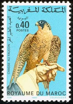 Peregrine Falcon stamps - mainly images - gallery format Postage Stamp Design, Postage Stamps, Peregrine Falcon, Wild Creatures, Birds Of Prey, Morocco, Dinosaur Stuffed Animal, Orient, Marrakesh