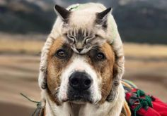 Baú do Luizinho: Cão e gato resgatados viram melhores amigos… e fam...