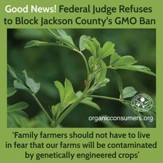 Jackson County's ban on GMOs holds strong! Last Friday a judge rejected a request by two GMO alfalfa farms to block the ban, stating that GMO crops are a danger to surrounding non-GMO crops.