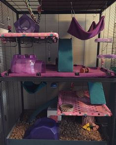 Nice assorted of things to do without the clutter. Nice assorted of things to do without the clutter. Chinchillas, Hamsters, Cute Ferrets, Cute Rats, Rodents, Chinchilla Cage, Ferret Cage, Hamster Cages, Critter Nation Cage