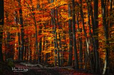 Forest density by Philippe Sainte-Laudy on 500px