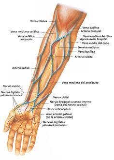 Best Picture For abdomen motivacio. Medicine Notes, Nursing School Notes, Medical Anatomy, Human Anatomy And Physiology, Phlebotomy, Body Anatomy, Pharmacology, Nursing Students, Reiki