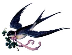 swallow with ribbon