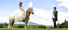 Portrait Hochzeit Horses, Portrait, Animals, Wedding, Animales, Animaux, Men Portrait, Horse, Portrait Illustration