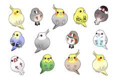 Cute Kawaii Drawings, Cute Animal Drawings, Bird Drawings, Kawaii Art, Baby Animals, Cute Animals, Budgies, Cockatiel, Parrots