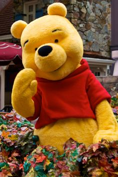 *Winnie The Pooh at Disney Character Central Magic Kingdom