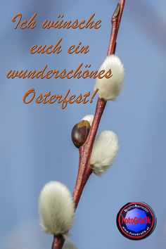 FotoGrafik bruno haneder wünscht euch allen frohe Ostern! Photos, Happy Easter, Celebration