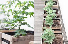 fein & raum: Weinkisten mit Tomaten