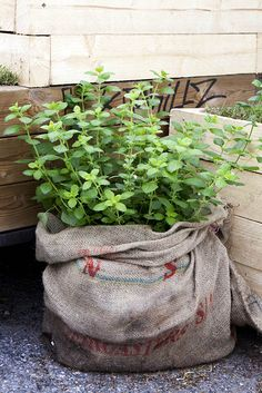 Coffee-bag gardening