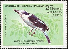 Hook-billed Vanga stamps - mainly images - gallery format