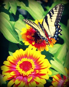 I got a special request for this series of butterfly photos, so I decided to list them on Etsy.  This one, like all the others, is $6.00.