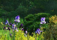 Iris - Jahreszeiten - Galerie - Community