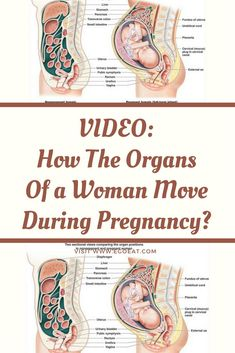 How The Organs Of a Woman Move During Pregnancy? Natural Cures, Natural Health, Healthy Tips, How To Stay Healthy, Health And Wellness, Health Fitness, Health Care, Mucus Plug, Cervical Mucus