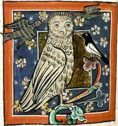 Bodleian Library, MS. Bodley 764, Folio 73v A screech owl mobbed by smaller birds