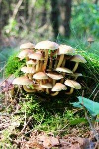 Stuffed Mushrooms, Autumn, Vegetables, Food, Stuff Mushrooms, Fall Season, Essen, Fall, Vegetable Recipes