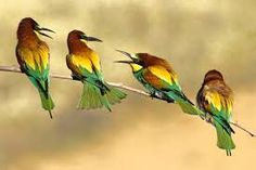 Image result for birdspics