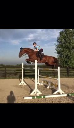 Most Beautiful Horses, Pretty Horses, Horse Love, Horses Jumping Videos, Horse Videos, Cute Horse Pictures, Horse Photos, Cavalo Wallpaper, Horse Girl Photography