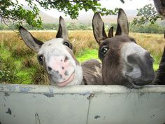 Donegal donkeys | Flickr - Photo Sharing!
