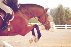 warmblood horse tumblr | dutch warmblood # horse # arena # bay horse