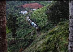 Nilgiri Mountain Rail runs in the #Nilgiri Hills region of #TamilNadu, #India, built by the British in 1908.