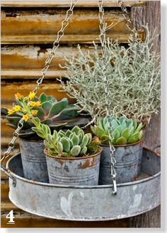 Basket of goodies: Upcycle an old tin tray and hang with clip-on chains. Complete the look with silvery succulents in metal pots - clipped from page 78 of Better Homes and Gardens, Dec 2013 issue by the Netpage app.