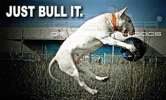 Just Bull It!!