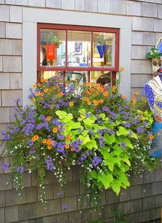Beautiful Flower Box - I think the large chartreuse foliage is sweet potato vine, the white flower is bacopa, the orange flower is trailing petunia, and the blue-violet flower is scaevola.  Let me know if you think differently!