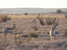 Just outside of Roswell - The wild life in Southeast New Mexico is amazing!