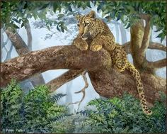 ~~~ Art of Penny Parker ~~~ A Resting Place Penny Parker, Matou, Wildlife Art, Big Cats, Beautiful World, Cute Pictures, Graphic Design, Artist, Artwork