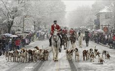 Can't wait to go this weekend - Middleburg Christmas Parade led by the Hunt Club