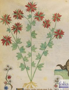 Your virtual eye on illuminated manuscripts, rare books, and the stories behind them. Botanical Drawings, Botanical Illustration, Botanical Prints, Medieval Manuscript, Illuminated Manuscript, Voynich Manuscript, Rumi Books, Garden Of Earthly Delights, Animal Sketches