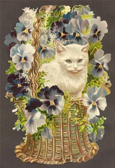 T64 - VICTORIAN SCRAP Large Cat in Pansy Basket EMBOSSED DIECUT OBLATEN CHROMO