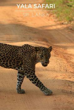 Yala safari Sri Lanka: 15 photos to inspire you to visit Yala national park and…